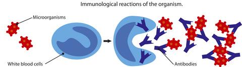immune response: antigen triggering release of antibodies