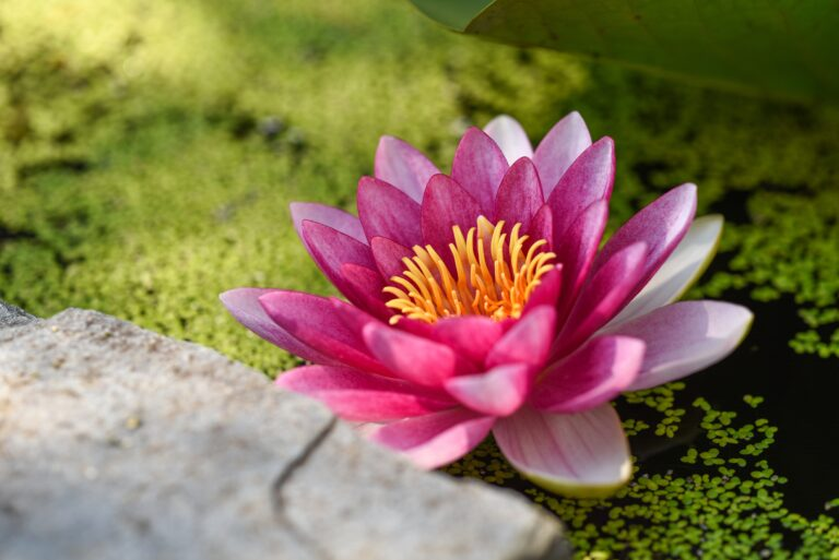 Ayurvedic Treatment for Cancer: An Introduction